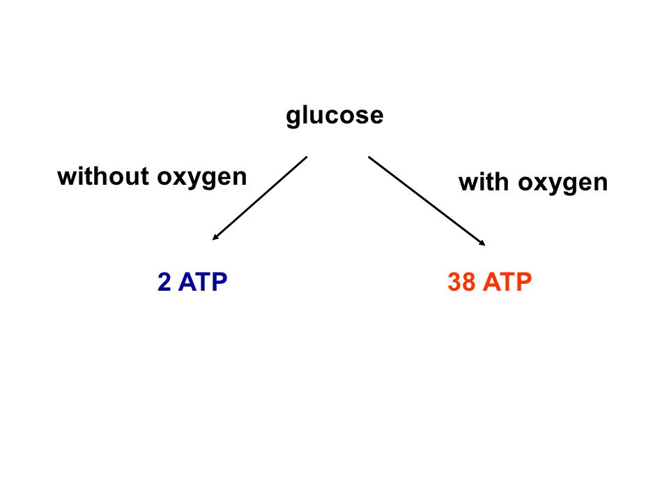 glucose without oxygen with oxygen 2 ATP 38 ATP