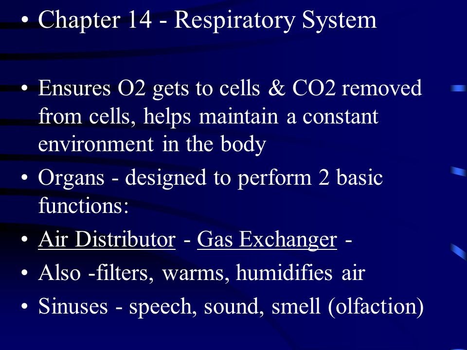 Chapter 14 - Respiratory System