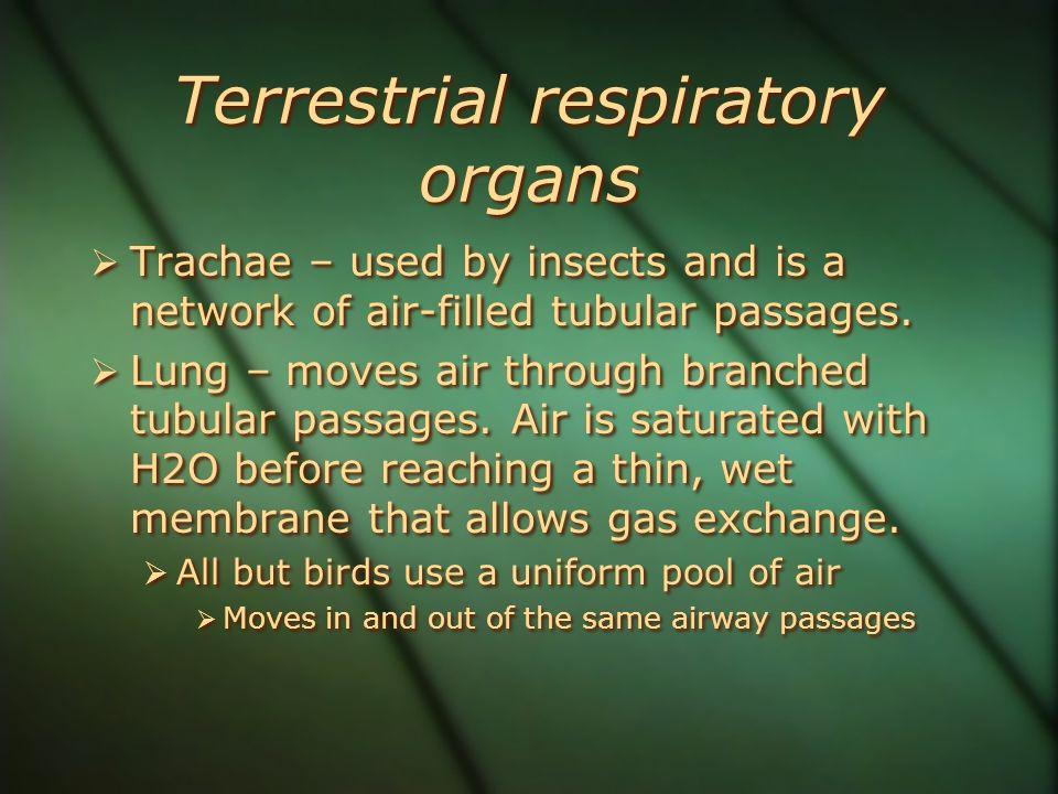 Terrestrial respiratory organs