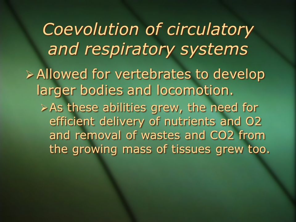 Coevolution of circulatory and respiratory systems