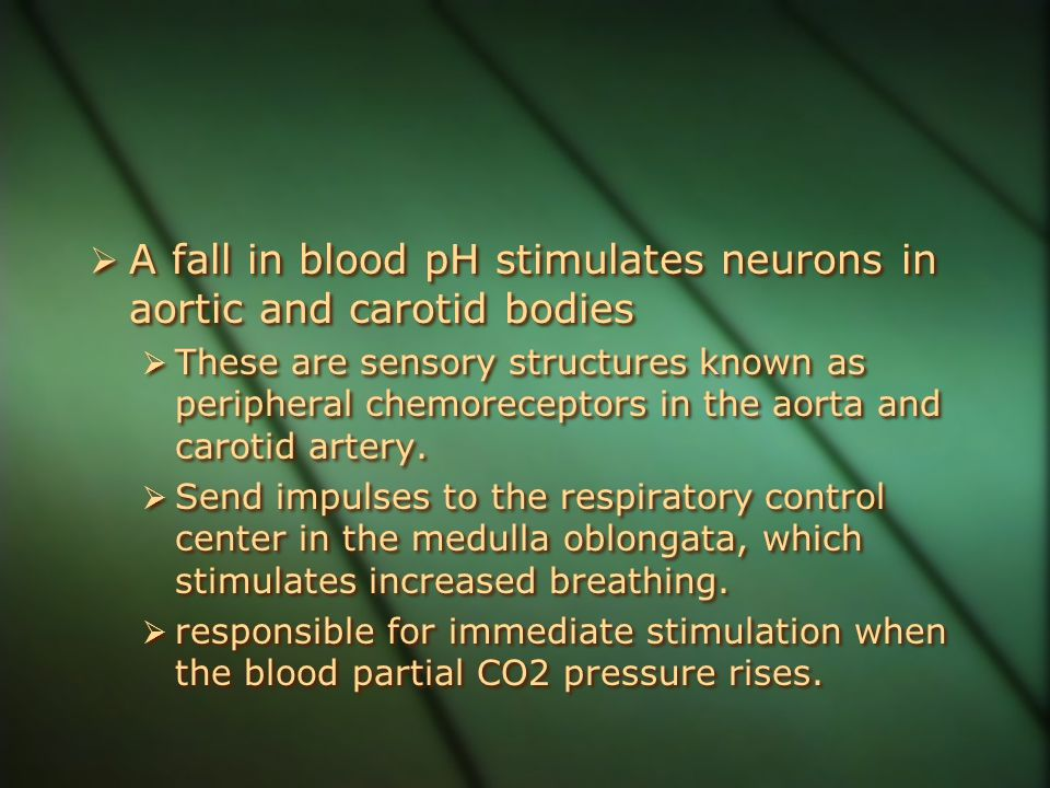 A fall in blood pH stimulates neurons in aortic and carotid bodies