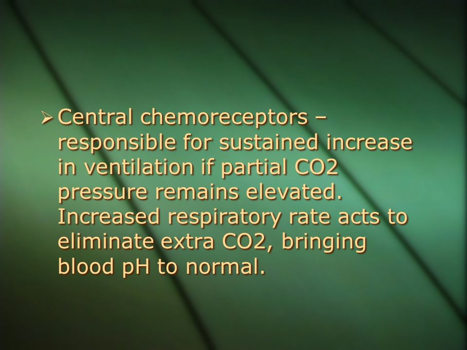 Central chemoreceptors – responsible for sustained increase in ventilation if partial CO2 pressure remains elevated.