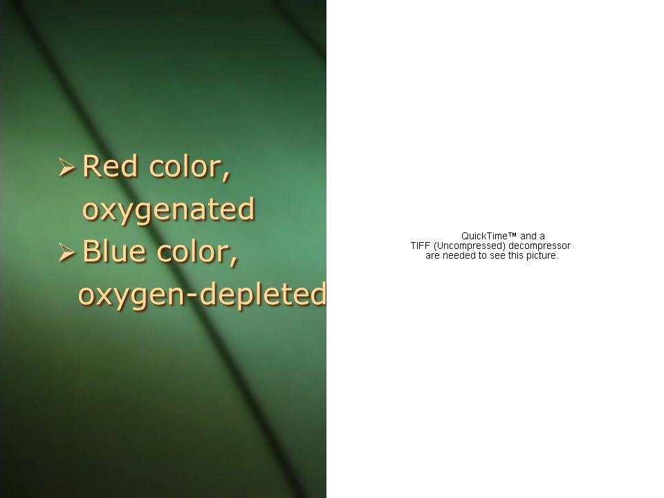 Red color, oxygenated Blue color, oxygen-depleted