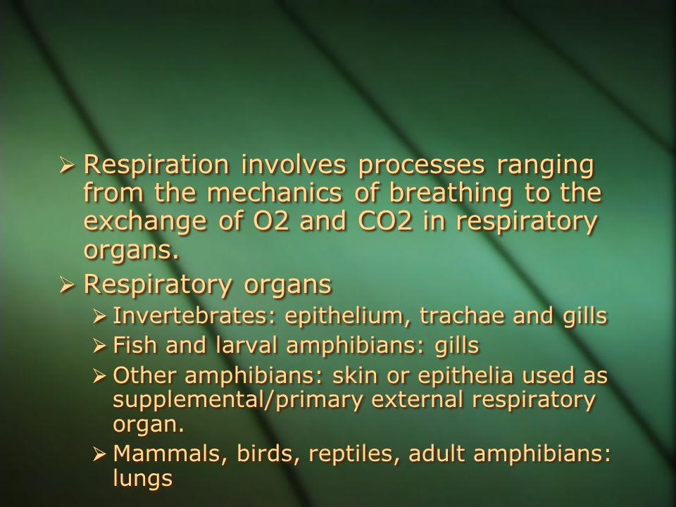 Respiration involves processes ranging from the mechanics of breathing to the exchange of O2 and CO2 in respiratory organs.