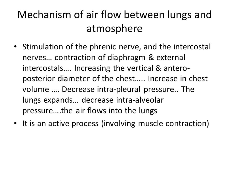 Mechanism of air flow between lungs and atmosphere