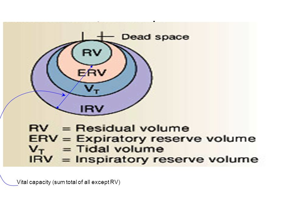 Lung volumes Vital capacity (sum total of all except RV)