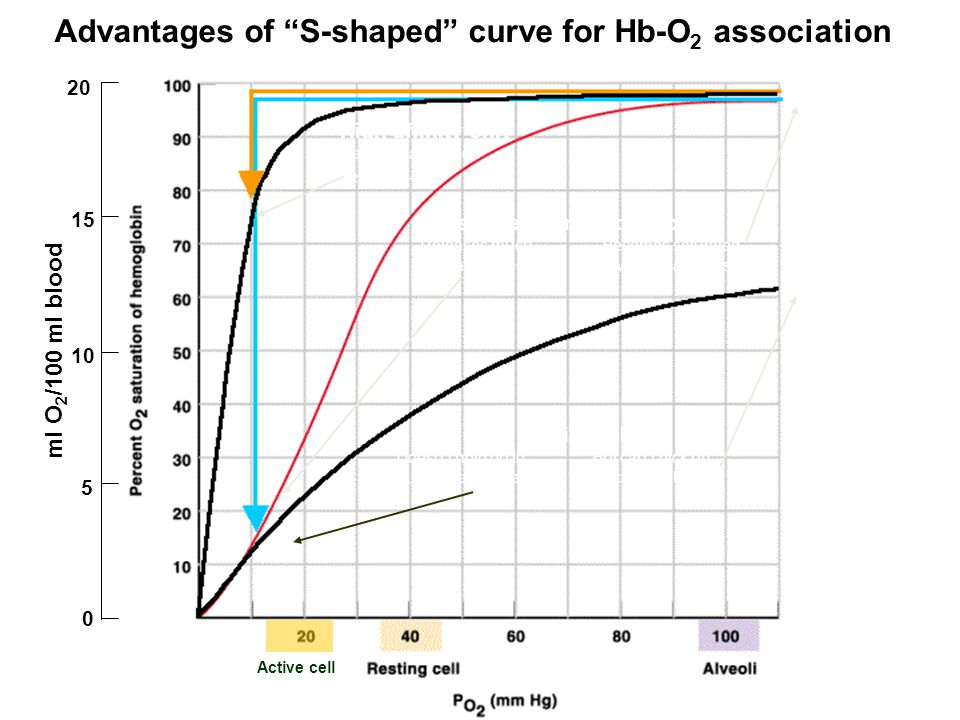 S-shaped hemoglobin curve