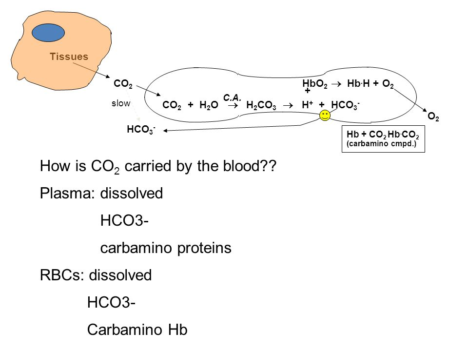 How is CO2 carried by the blood Plasma: dissolved HCO3-