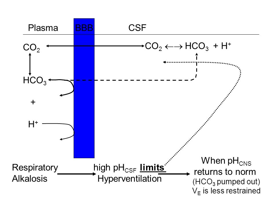 Plasma BBB CSF CO2 HCO3 + H+ CO2  HCO3 + H+ When pHCNS