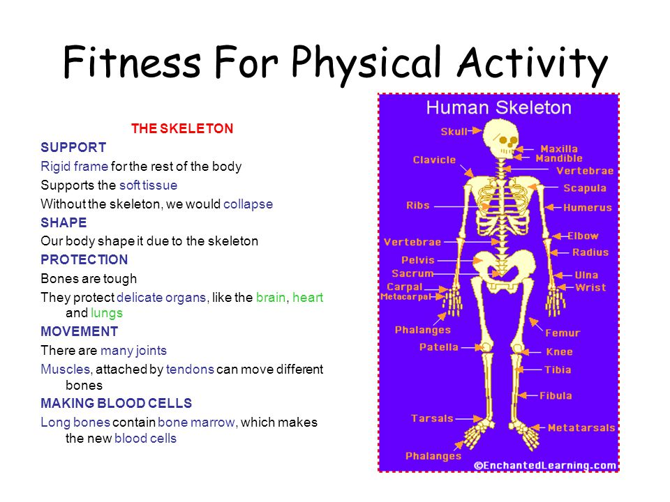 Fitness For Physical Activity