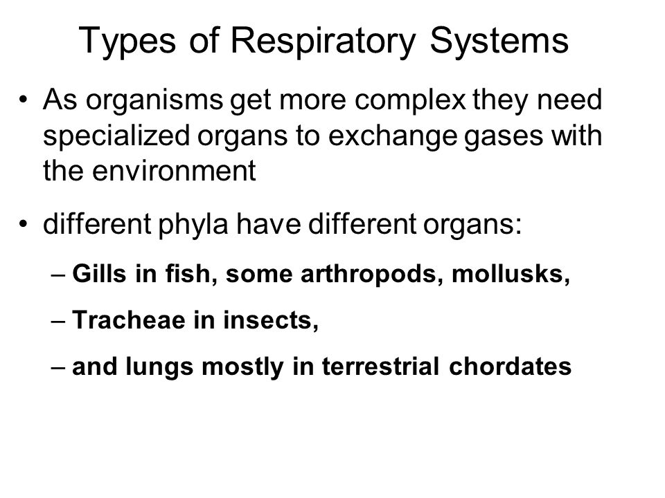 Types of Respiratory Systems