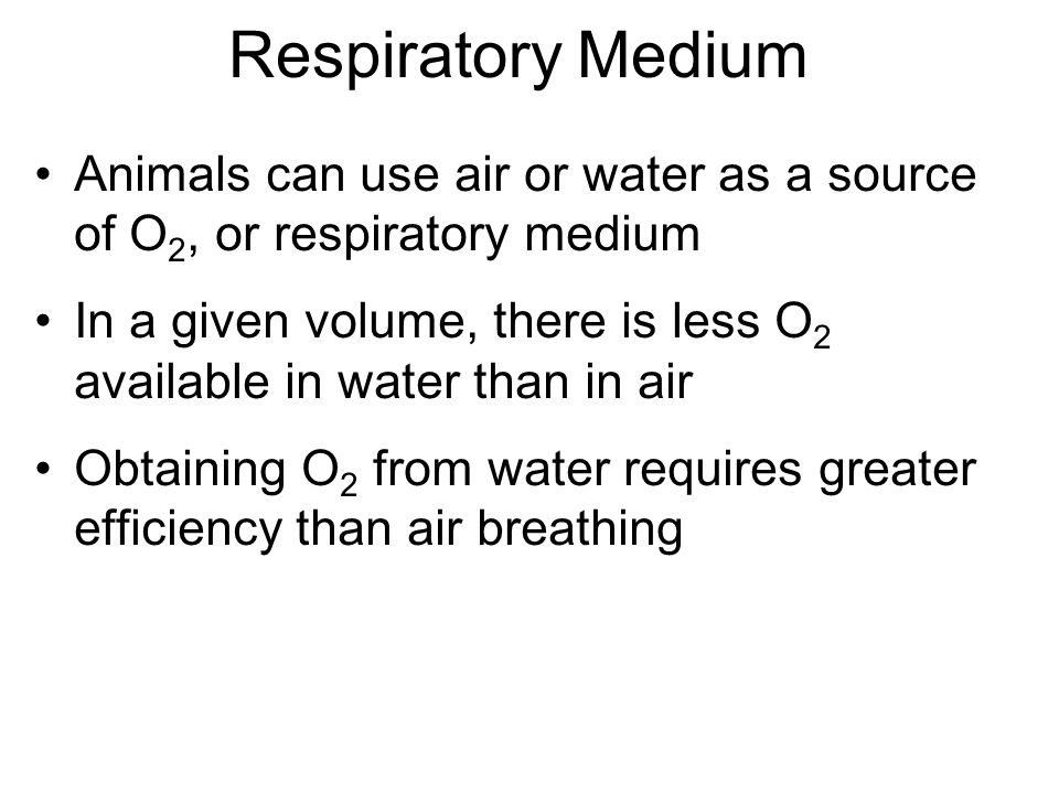 Respiratory Medium Animals can use air or water as a source of O2, or respiratory medium.