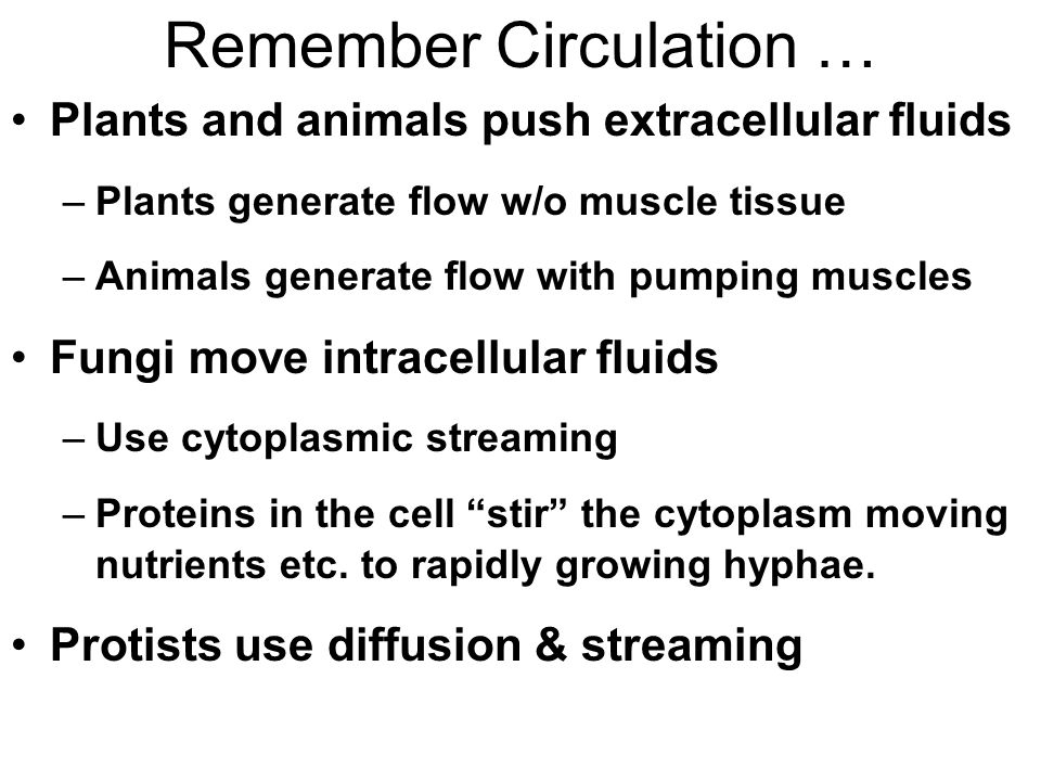Remember Circulation …
