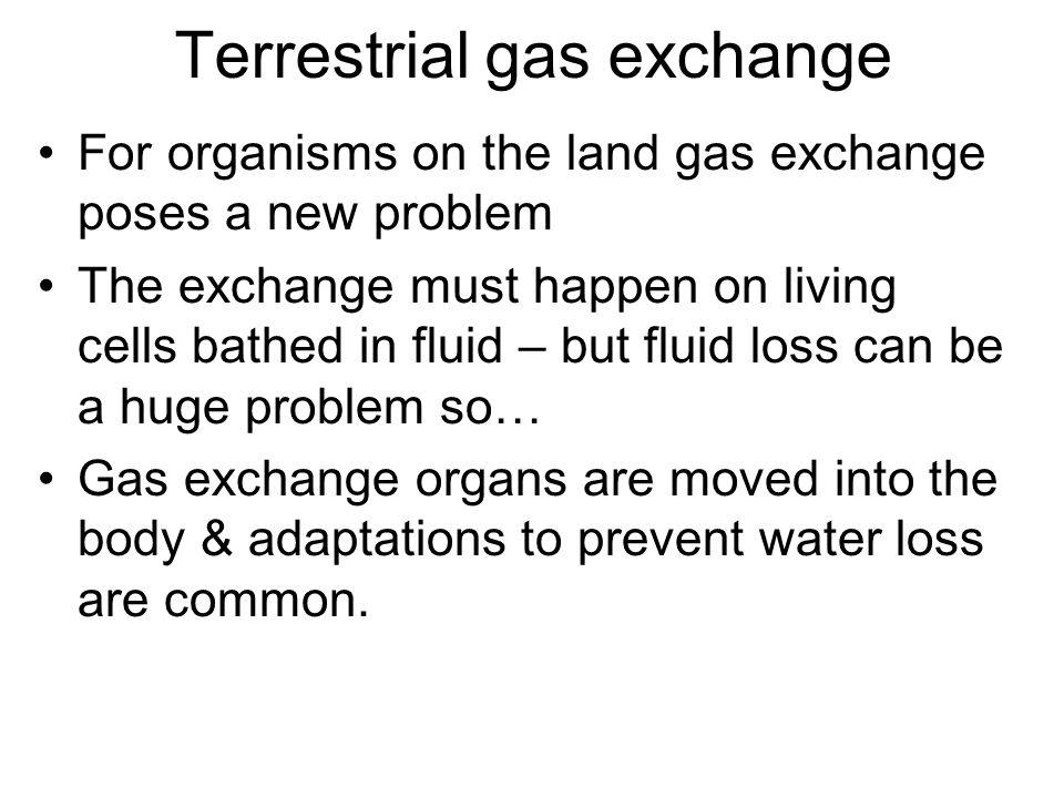 Terrestrial gas exchange