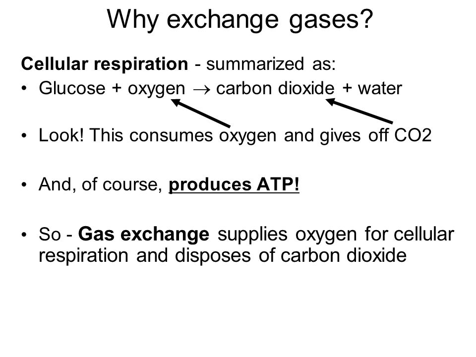 Why exchange gases Cellular respiration - summarized as: