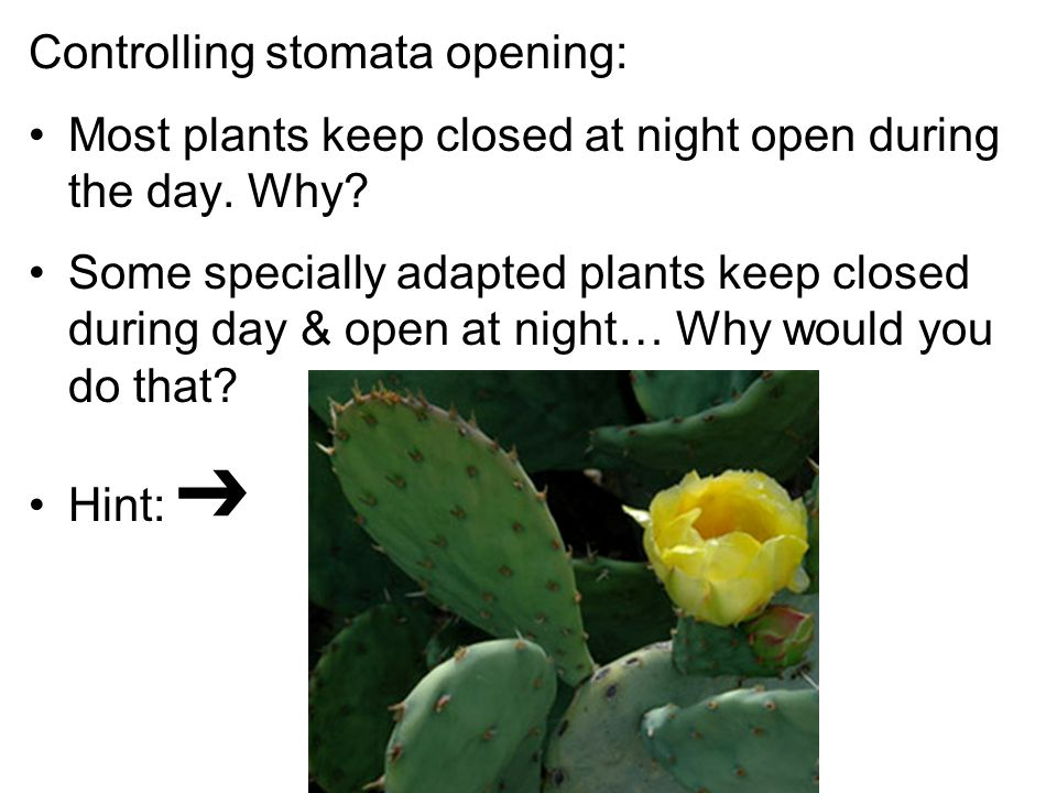 Controlling stomata opening: