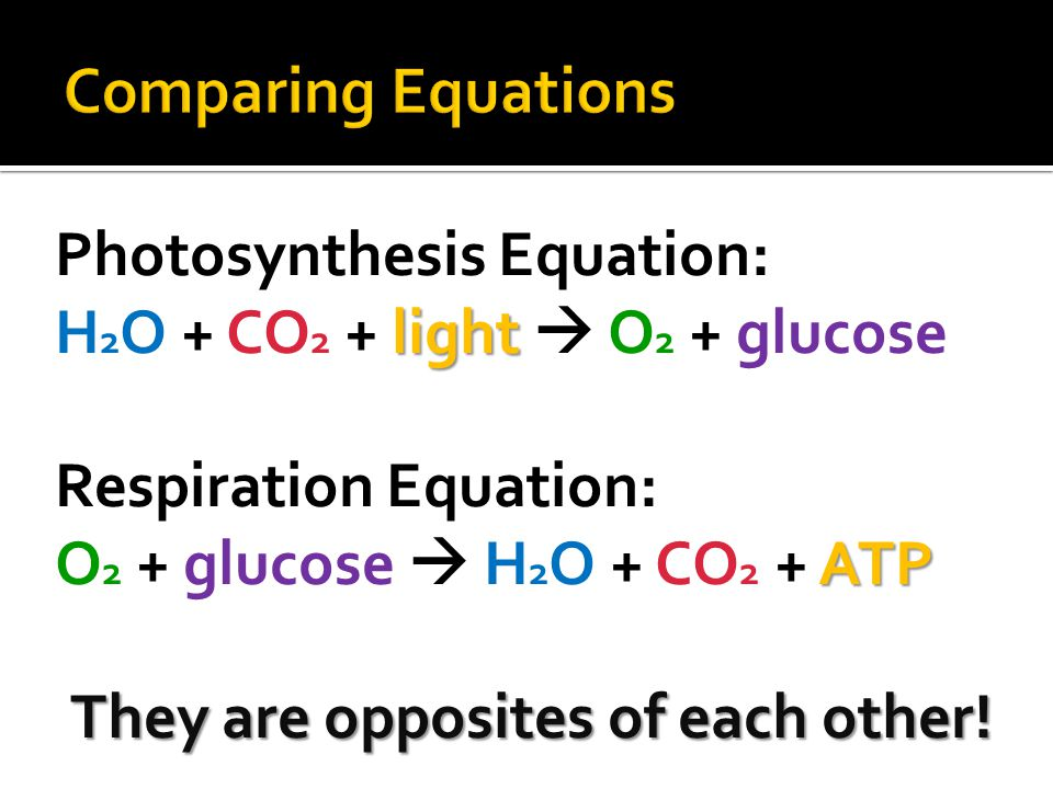 Comparing Equations