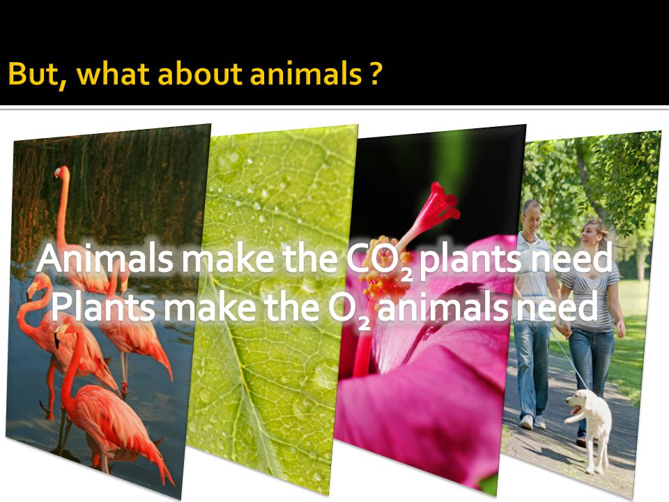 Animals make the CO2 plants need Plants make the O2 animals need