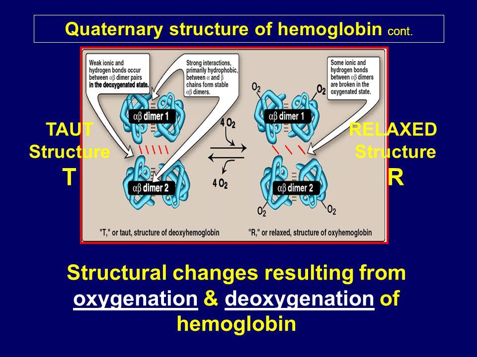 Quaternary structure of hemoglobin cont.