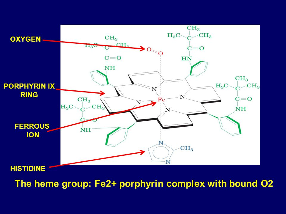The heme group: Fe2+ porphyrin complex with bound O2