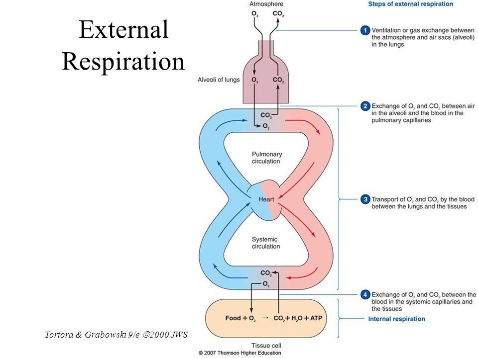 External Respiration Tortora & Grabowski 9/e 2000 JWS