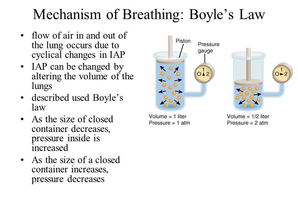Mechanism of Breathing: Boyle's Law