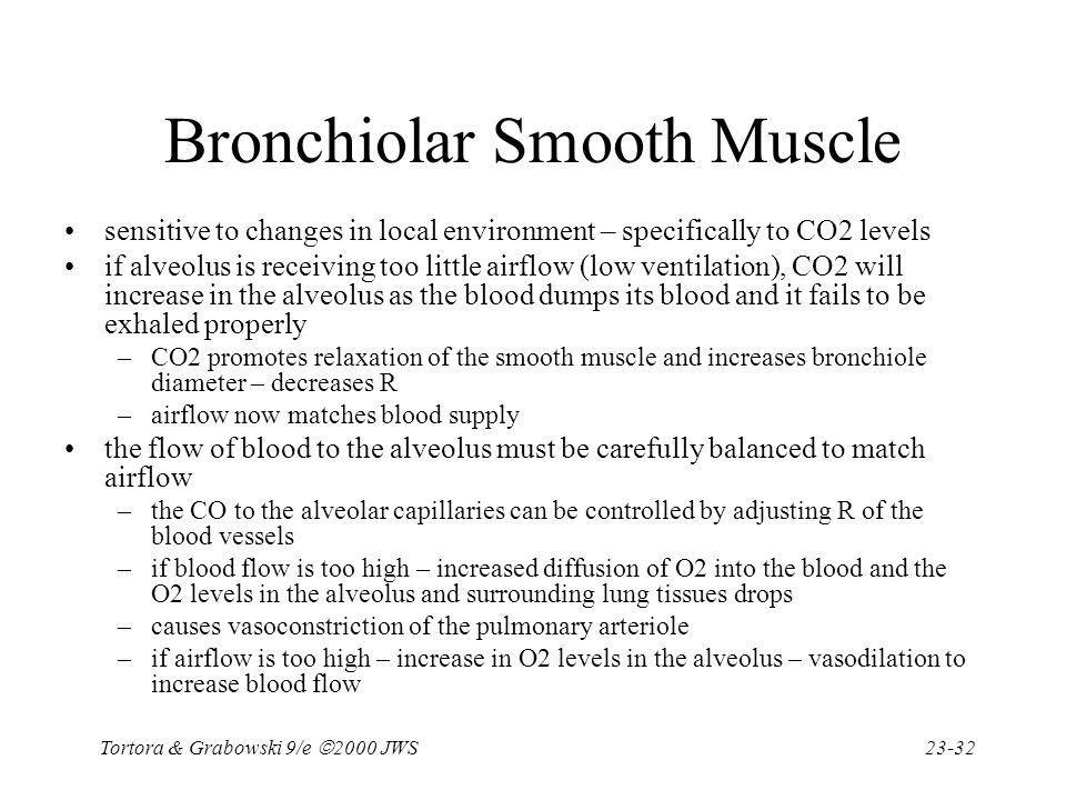 Bronchiolar Smooth Muscle