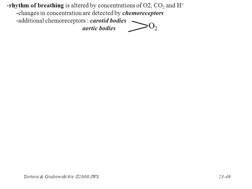 O2 -rhythm of breathing is altered by concentrations of O2, CO2 and H+