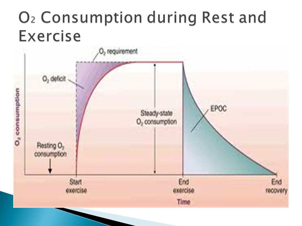 O2 Consumption during Rest and Exercise