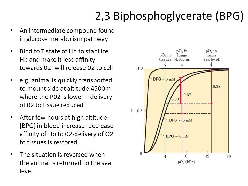 2,3 Biphosphoglycerate (BPG)