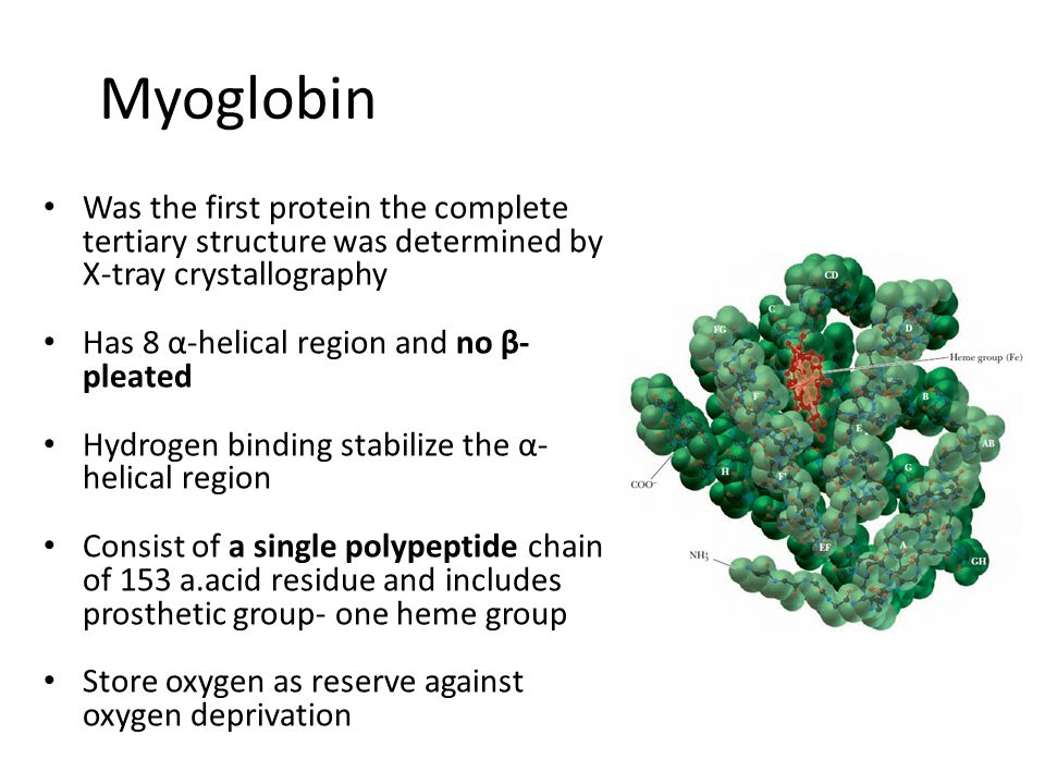 Myoglobin Was the first protein the complete tertiary structure was determined by X-tray crystallography.