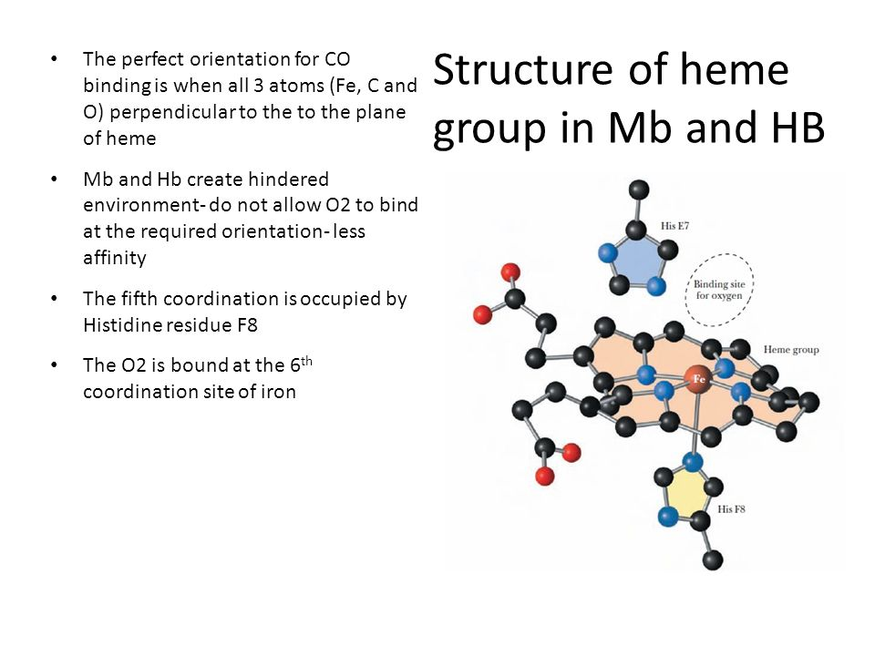 Structure of heme group in Mb and HB