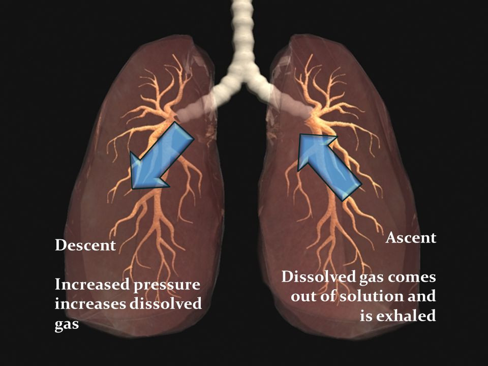 Ascent Dissolved gas comes out of solution and is exhaled.