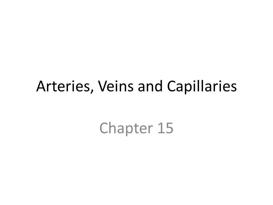 Arteries, Veins and Capillaries