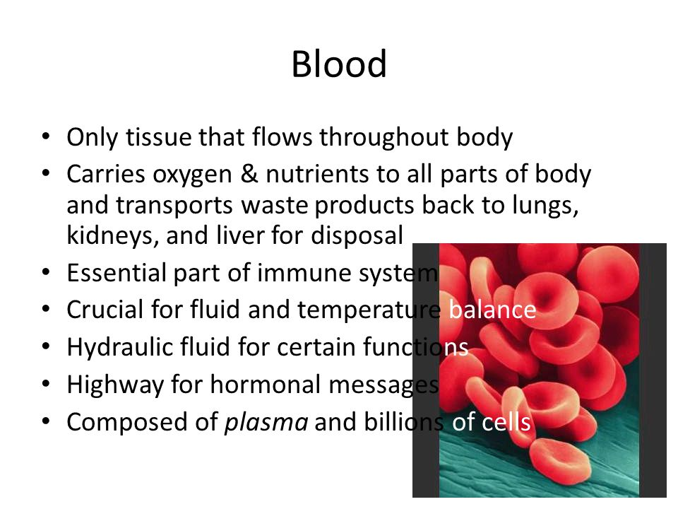 Blood Only tissue that flows throughout body