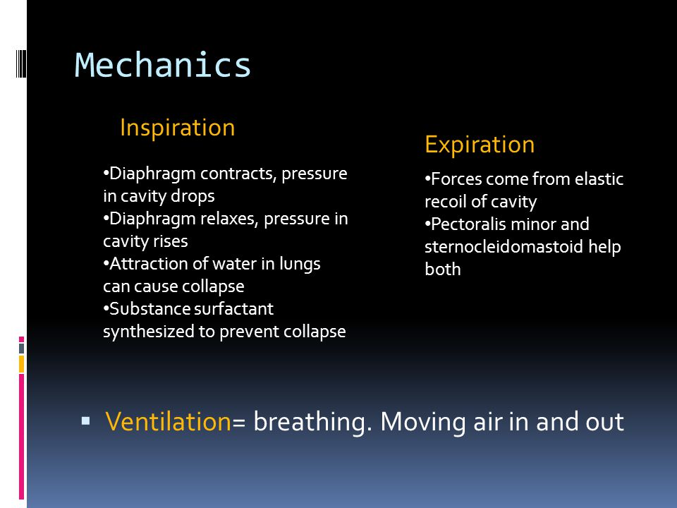 Mechanics Ventilation= breathing. Moving air in and out Inspiration