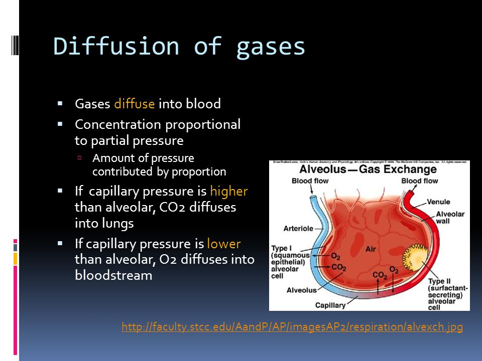 Diffusion of gases Gases diffuse into blood