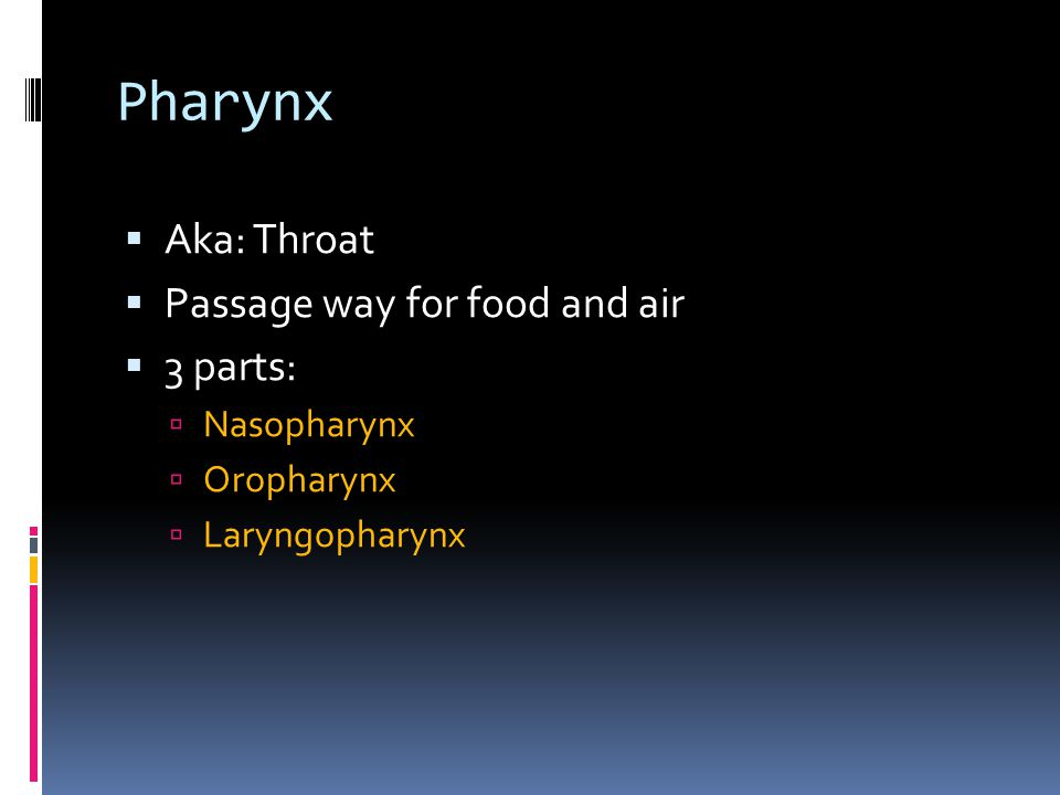 Pharynx Aka: Throat Passage way for food and air 3 parts: Nasopharynx