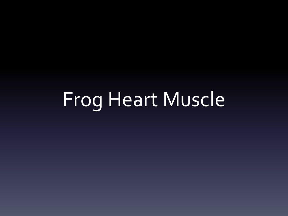 Frog Heart Muscle