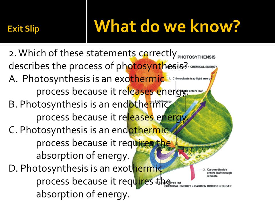Exit Slip What do we know 2. Which of these statements correctly describes the process of photosynthesis