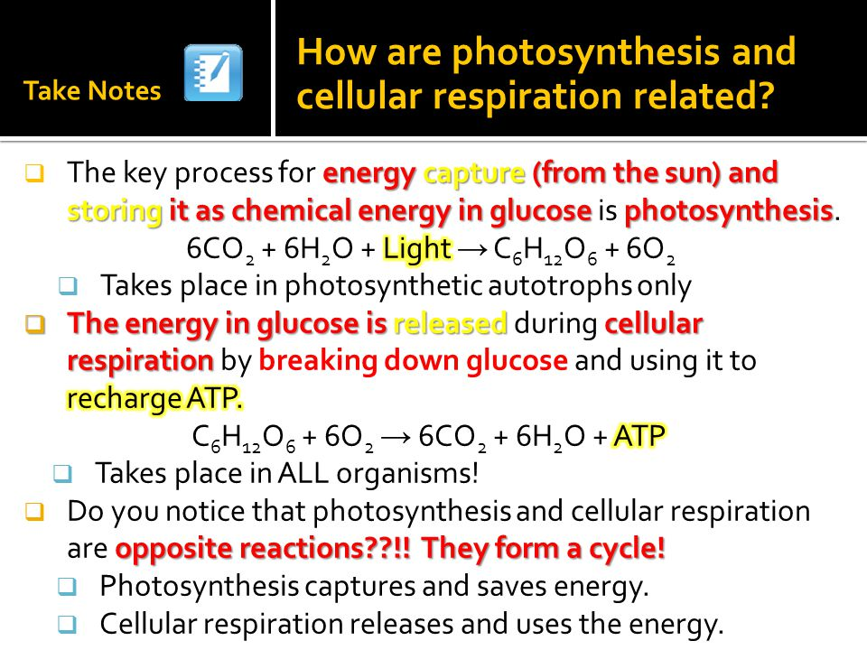 bozeman cellular respiration and photosynthesis relationship