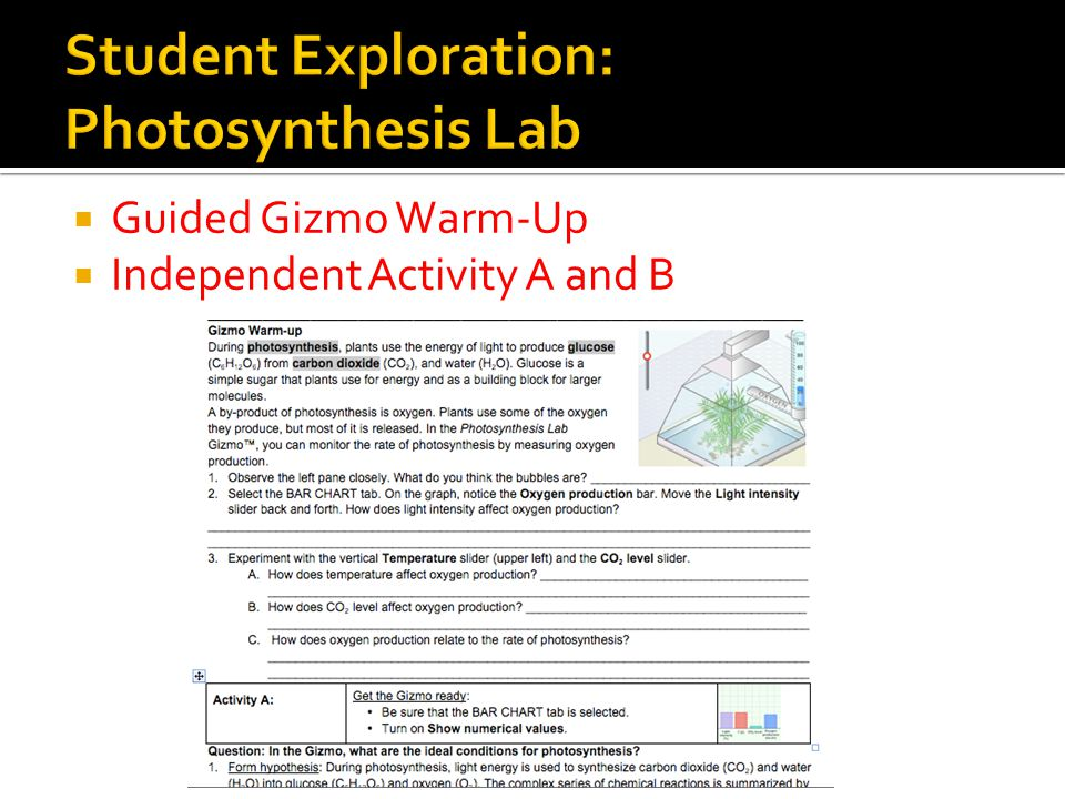 photosynthesis lab answers Ap biology investigation on photosynthesis includes background information and instructions for using spinach leaf disks, light, and baking soda to measure the rate of photosynthesis.