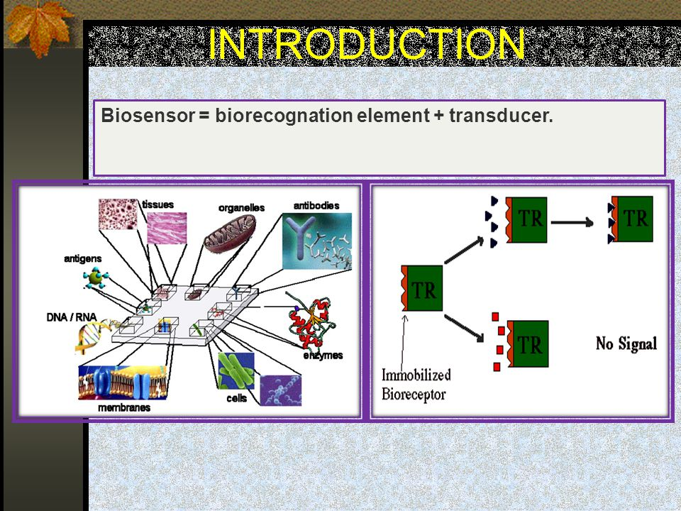 INTRODUCTION Biosensor = biorecognation element + transducer.
