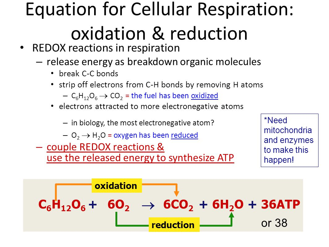 Equation for Cellular Respiration: oxidation & reduction