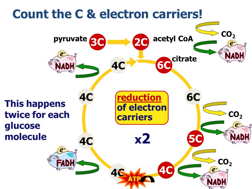 Count the C & electron carriers!