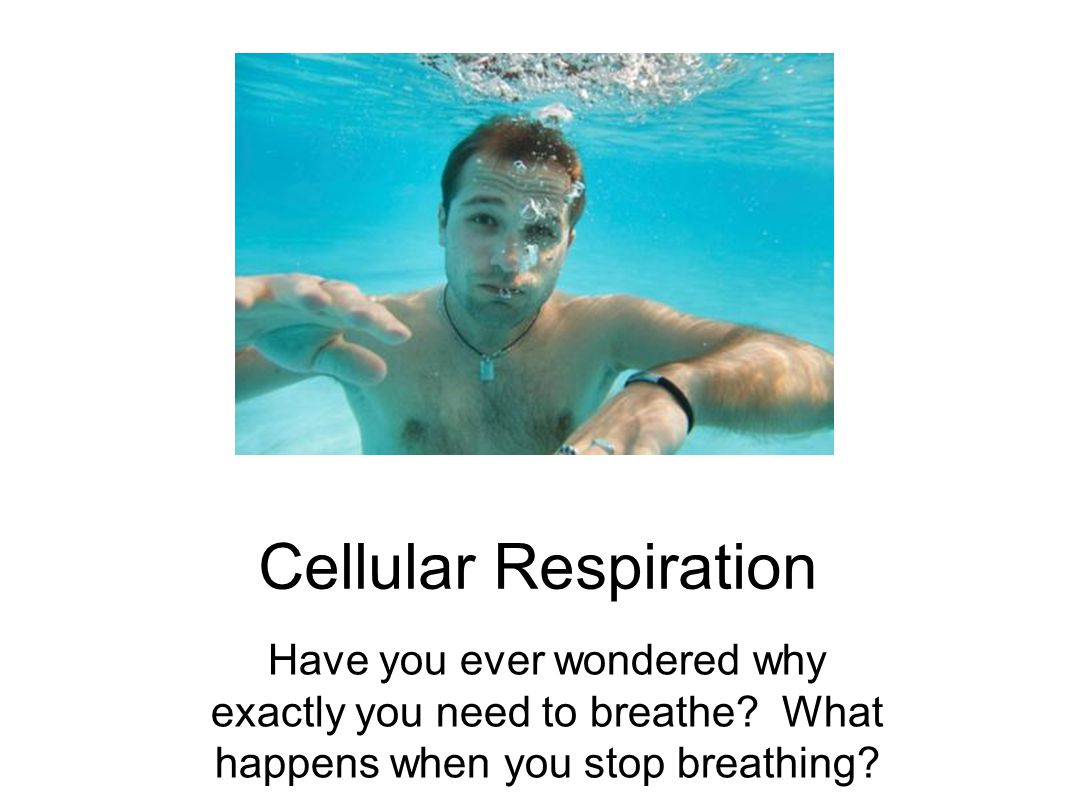 Cellular Respiration Have you ever wondered why exactly you need to breathe.