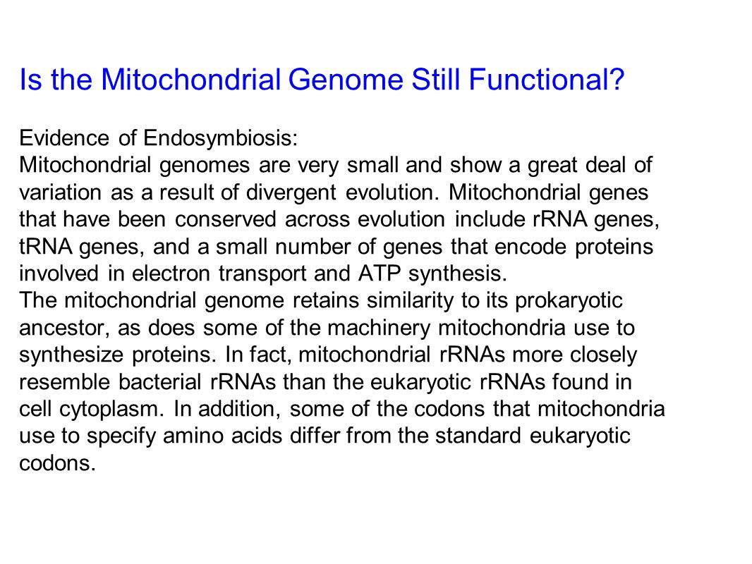 Is the Mitochondrial Genome Still Functional