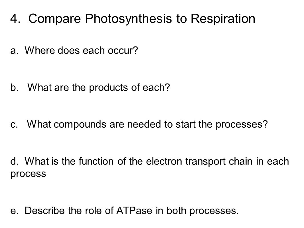 4. Compare Photosynthesis to Respiration