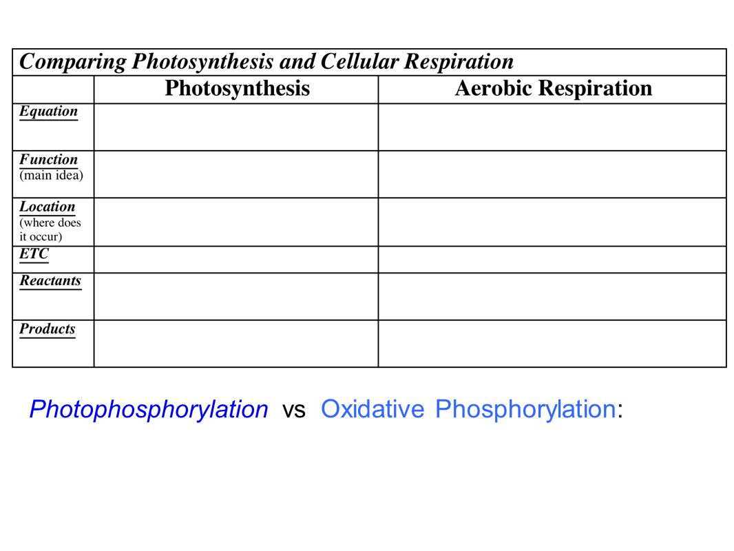 Photophosphorylation vs Oxidative Phosphorylation: