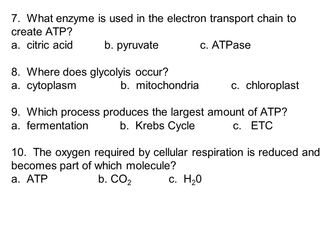 7. What enzyme is used in the electron transport chain to create ATP